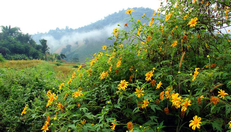 tantawanDoi Hua Mae Kham
