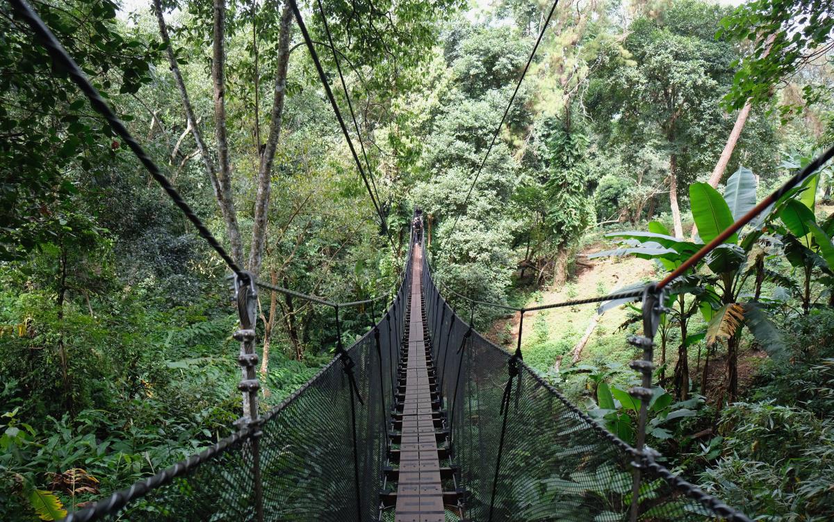 tantawandoitung-tree-top-walk-at-chiang-rai